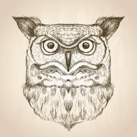 sowa: Szkic ilustracji z głową sowy, widok z przodu, wektor Dzika ręcznie rysowane wygląd.