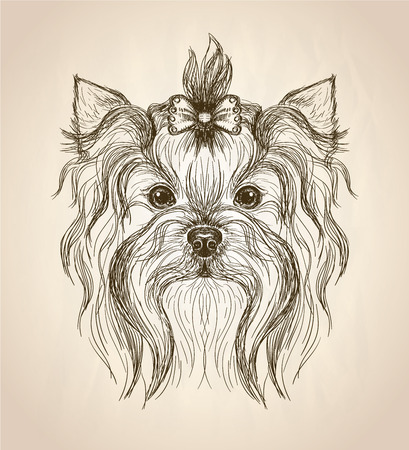 small dog: Hand drawn graphic portrait of yorkshire terrier, front view vector illustration.