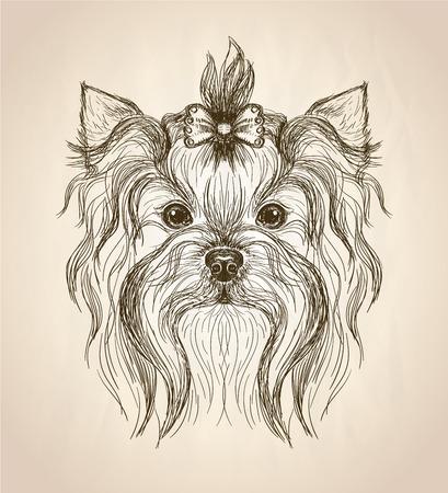 Hand getekende grafische portret van yorkshire terriër, vooraanzicht vector illustratie.