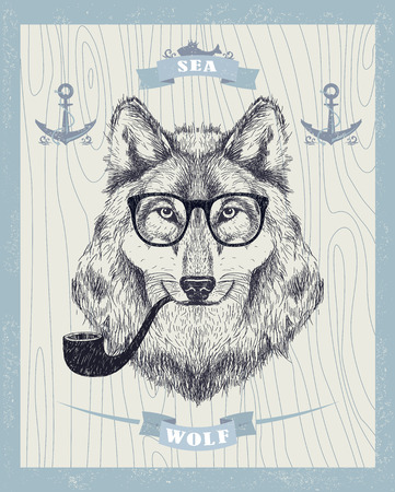 wolves: Sea wolf vector card, smoking hipster wolf with sunglasses and tobacco pipe.
