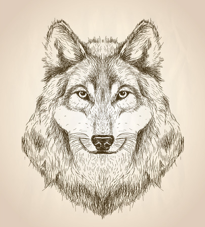 dog pen: sketch illustration of a wolf head front view, black and white wildlife design.