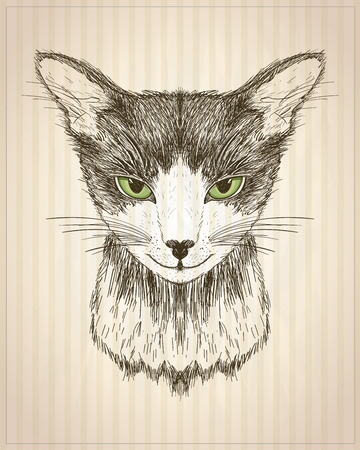 Graphic poster with cat portrait, front view, hand drawn vector illustration, t-shirt design
