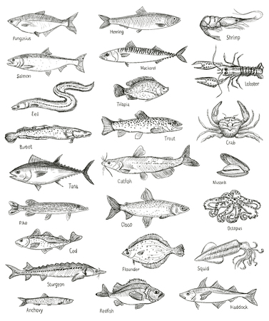 Fish and seafood hand drawn graphic illustration mega set, isolated on white