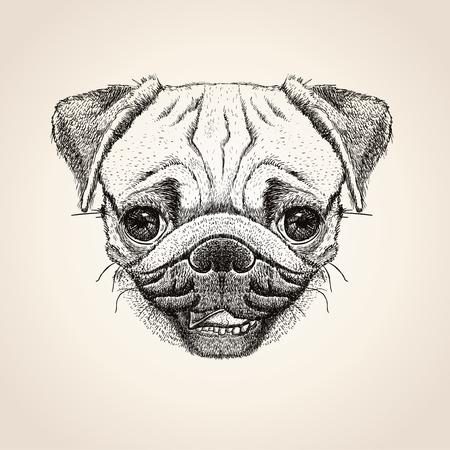Pug dog head, hand drawn illustration, cute pug dog graphic portrait Ilustração