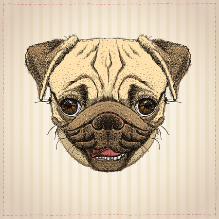 Pug dog graphic portrait, hand drawn vector illustration with cute pug dog