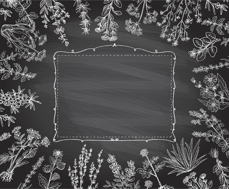 Cornice di erbe su una lavagna, erbe di gesso disegnate a mano di vettore e cornice di vecchio stile
