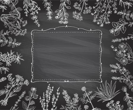 Kräuterrahmen auf einer Tafel, handgezeichnete Kreidekräuter des Vektors und Rahmen im alten Stil