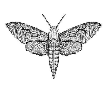 Sphingidae-Schmetterlinge grafische Illustration Vektorgrafik