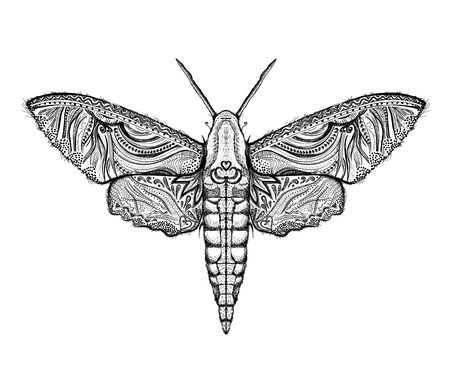 Sphingidae hawk-moths graphic illustration Illustration