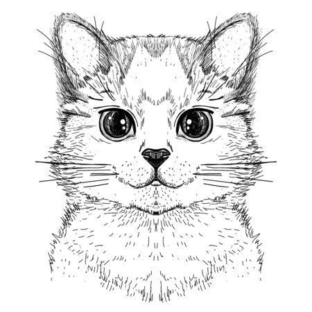 Lindo gatito, dibujo gráfico dibujado a mano ilustración de una cara de gato, vista frontal
