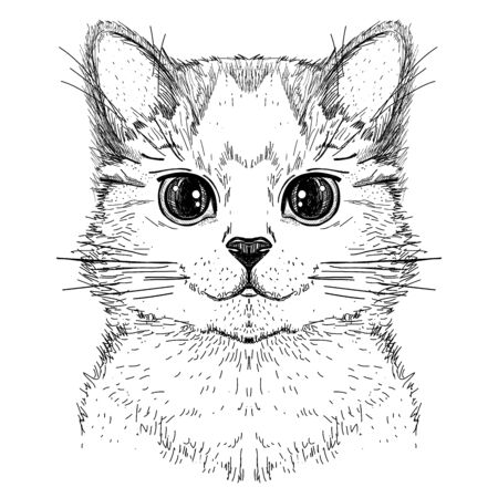 Simpatico gattino, schizzo grafico disegnato a mano illustrazione di una faccia di gatto, vista frontale front