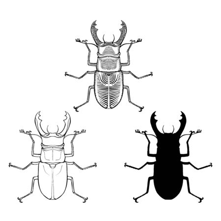Stag-beetle graphic vector illustration set - graphic, line and silhouette version