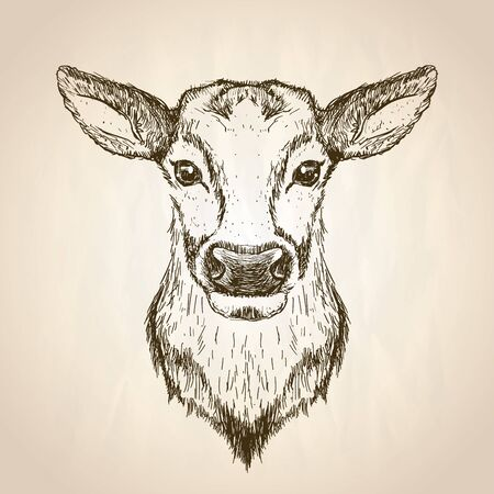 Female deer graphic sketch portrait illustration, front view, vector hand drawn wildlife poster