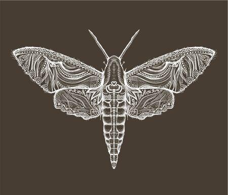 Sphingidae hawk-moths graphic illustration Illusztráció
