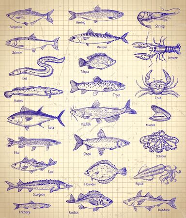 Fish and seafood graphic illustration set on a paper