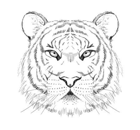 Graphic sketch tiger portrait, front view, hand drawn vector illustration, tattoo design 일러스트
