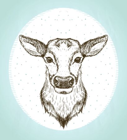 Female deer front view portrait, vintage style graphic sketch illustration