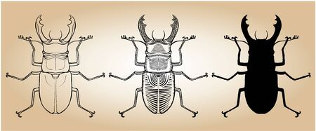 Stag-beetle vector illustration set - graphic, line and silhouette version