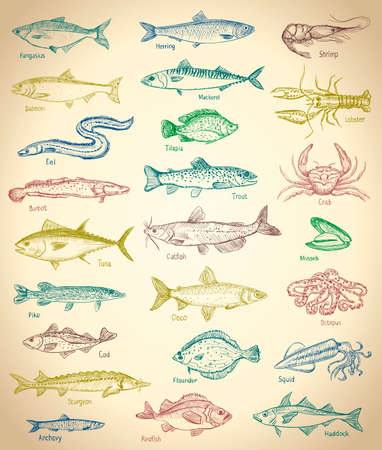 Fish and seafood hand drawn graphic illustration set with old paper backdrop