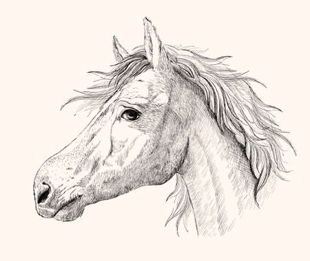 Graphic horse profile portrait, black and white hand drawn ink vector sketch
