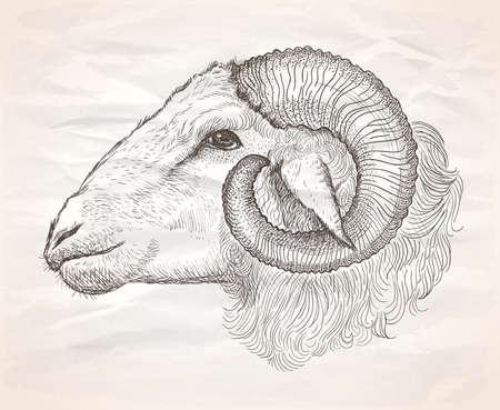 Ram profile portrait, graphic vector hand drawn illustration