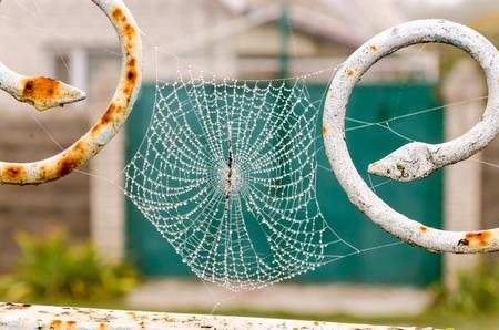 Spinneweb met dauw druppels close-up. Bij dageraad.