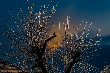 implications: Iced branches of trees on a frosty day. The sun behind the clouds.