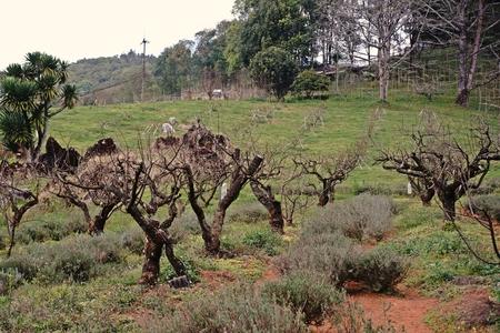 pruned plants managed for flowering