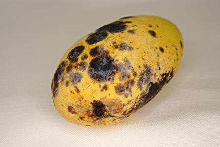 mango fruit post harvest disease