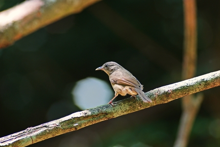 bird in natural forest, Thailand