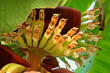 banana heart, banana flowers set