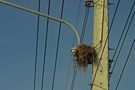bird net on electric light