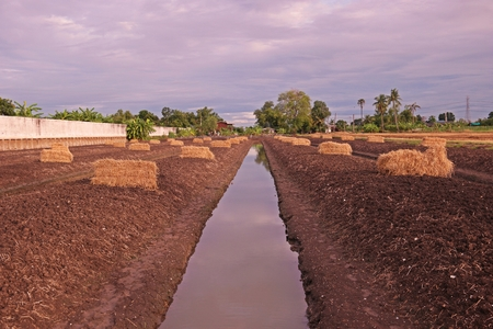 straw;material for soil mulching in agriculture