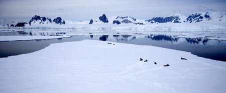 Antarctic Landscape with seals sleeping on the ice photo