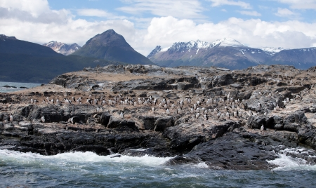 cormorants: Ushuaia Landscape with Cormorants