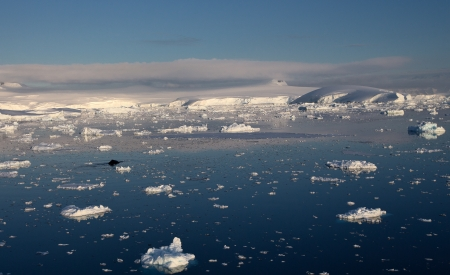 Antarctic Landscape - Icebergs photo