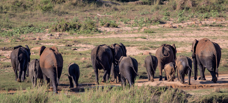 A small herd of Elephants in Kruger National Park Stock fotó