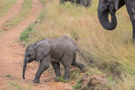Cute Baby Elephant in Kruger National Park Stock fotó - 38285932