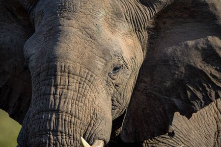 An Elephant portrait in Kruger National Park
