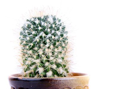green cactus isolated on the white background photo