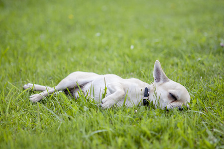 dormir: Perro duerme en la hierba verde Foto de archivo