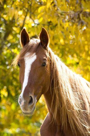 cabeza de caballo: animal del campo del caballo