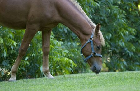 Horse on a green meadow photo