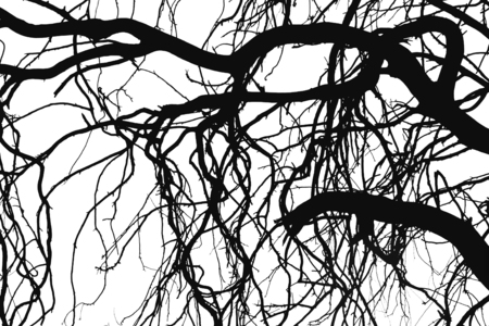 a bough: Tree silhouettes branches isolated on the white background