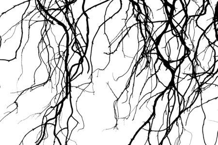 lonely: Tree silhouettes branches isolated on the white background