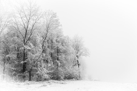 snow scenes: Mist in Winter Forest, Silhouette of Tree on a foggy day