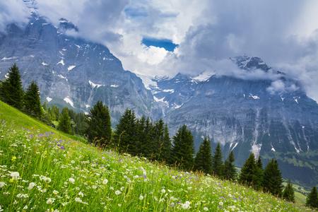 swiss alps: Zielona Łąka w szwajcarskich Alp, Szwajcaria Interlaken - Lauterbrunnen Zdjęcie Seryjne