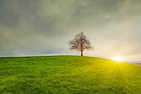 Dramatic sky and sunsrise over old lonely tree - Lonely tree Stock Photo