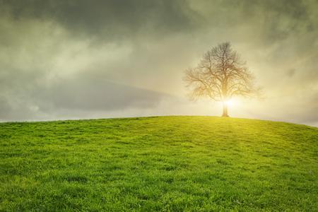 Dramatischer Himmel und sunsrise über alte einsame Baum - Einsamer Baum Standard-Bild