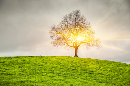 lonely tree: Dramatic sky and sunrise over old lonely tree - Lonely tree